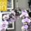 Le salon Zen 2020 est confirmé